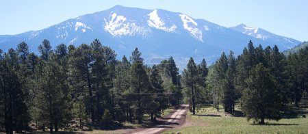 A forest road through the ponderosa pines beckons travelers up toward the s