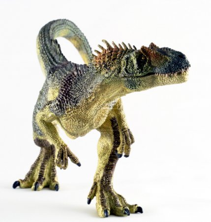 An Allosaurus Dinosaur Stands Against a White Background