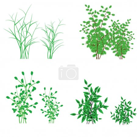 Grass, shrubs