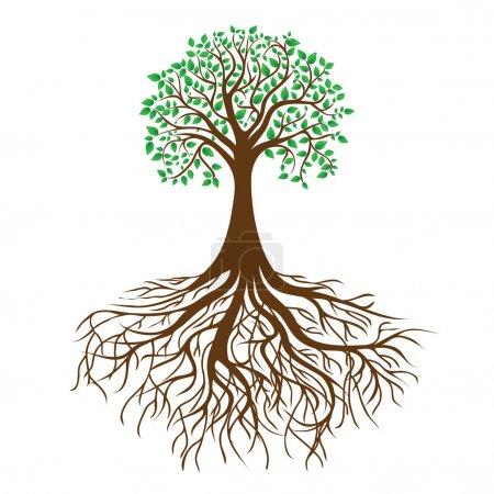 Illustration pour Arbre avec racines et feuillage dense, image vectorielle - image libre de droit