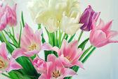 Bílý a růžový tulips2