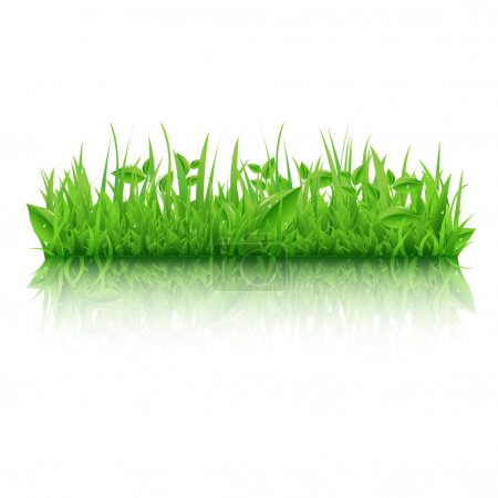 Illustration for Green Grass With Leafs, Isolated On White Background, Vector Illustration - Royalty Free Image