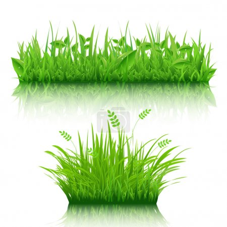 Illustration for 2 Grass Border, Isolated On White Background, Vector Illustration - Royalty Free Image