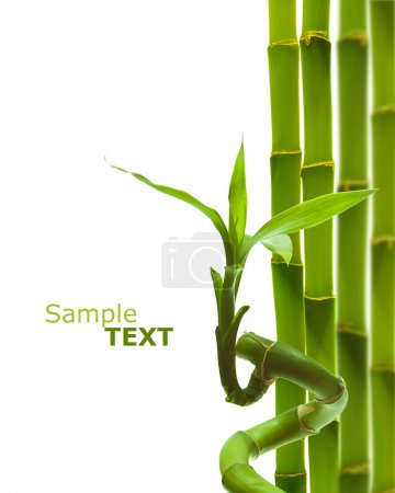 Photo for Green decorative bamboo on a white backround - Royalty Free Image