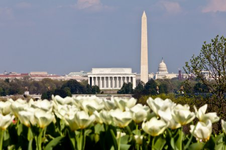 Photo for View of Washington DC skyline in late afternoon on a sunny day with Lincoln Memorial, Washington Monument and the Capitol with out of focus blooming white tulips in the foreground - Royalty Free Image