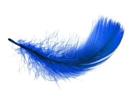 Photo pour Plumes bleues sur fond blanc - image libre de droit