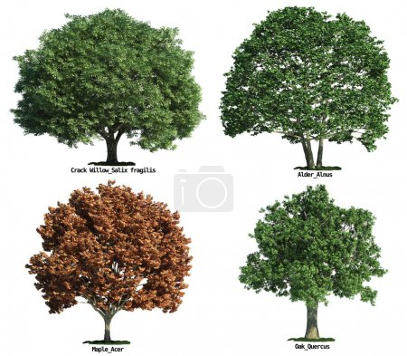 Set of trees isolated on white