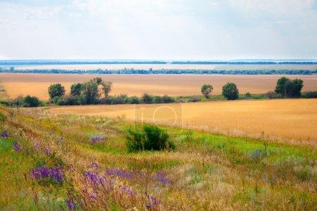 grüne Wiesen und Felder Landschaft