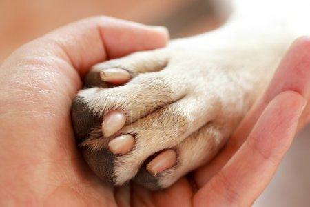 Photo pour Amitié entre l'homme et le chien - serrer la main et la patte - image libre de droit