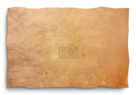 Goat skin parchment, blank sheet for map, old bann...