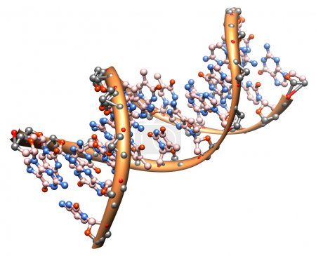 Photo for Organic chemistry: model of the DNA molecule - illustration of a biological particle - Royalty Free Image