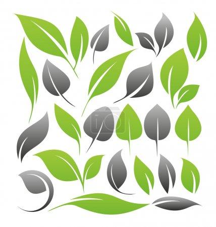 Illustration for Set of leaf design elements - Royalty Free Image