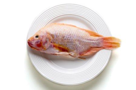 Gold fish, sea bass in white dish