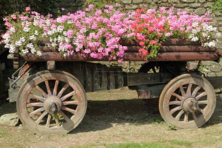 Wooden cart full of pink, red and white flowers...