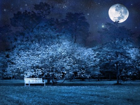 Photo for Mystical full moon starry night in park - Royalty Free Image