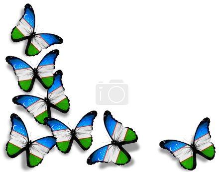 Photo pour Papillons de drapeau ouzbek, isolés sur fond blanc - image libre de droit