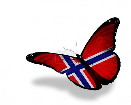 Norwegian flag butterfly flying, isolated on white background