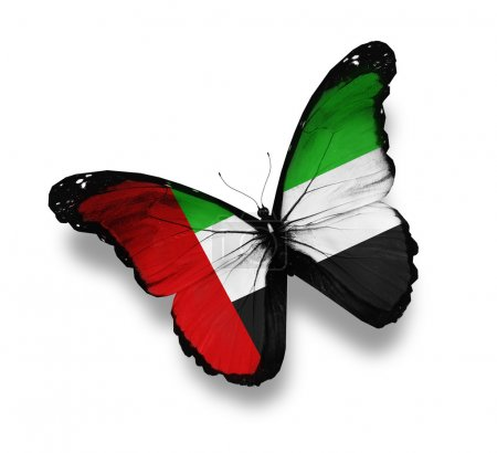 UAE flag butterfly, isolated on white