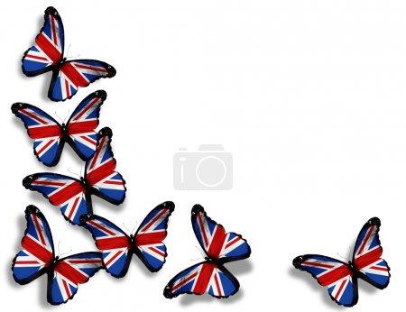 Photo pour Papillons de drapeau anglais, isolés sur fond blanc - image libre de droit