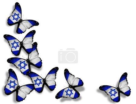 Photo pour Papillons drapeau israélien, isolés sur fond blanc - image libre de droit