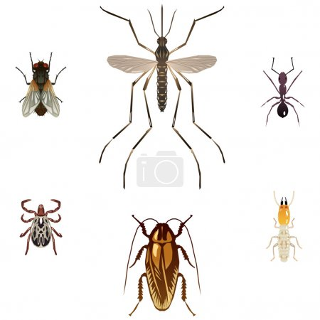 Illustration for Housefly, mosquito, ant, tick, cockroach and termite illustrations - Royalty Free Image