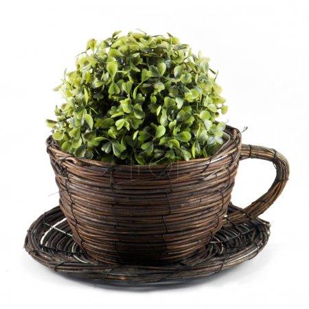 Photo pour Jardinière décorative en osier avec fleur - image libre de droit