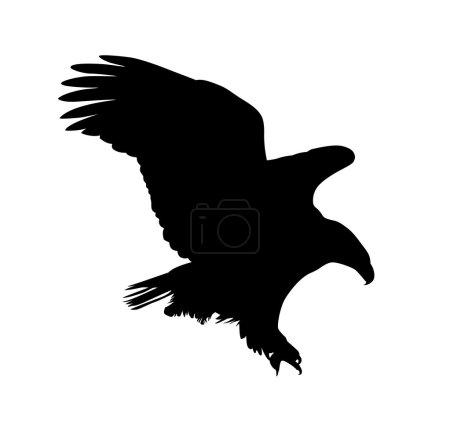 Eagle vector