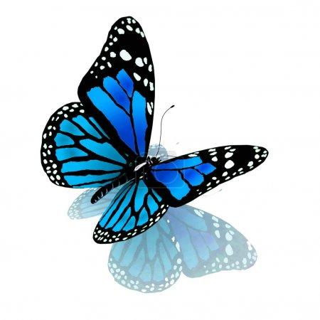 Photo pour Papillon isolé de couleur bleue sur fond blanc - image libre de droit