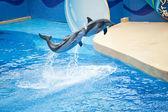 Dolphin show, Ocean Park