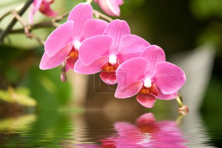 Foto de Primer plano de una hermosa orquídea tropical - Imagen libre de derechos