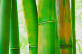 Abstract Zen Bamboo Background