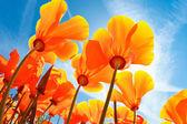 """Постер, картина, фотообои """"красивые весенние цветы"""""""