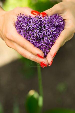 Purple flower heart