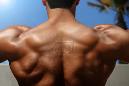 Photo for Photo of bodybuilder's back with muscles visible - Royalty Free Image