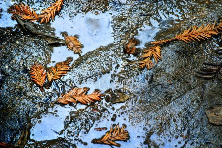 Leafs in puddle in dirt...