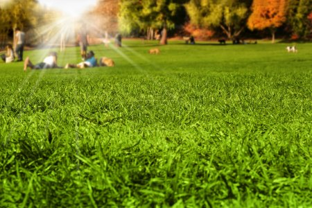 Photo for Park scene with detail grass in foreground and blurred enjoying nature in the background with sun flare rays breaking through - Royalty Free Image