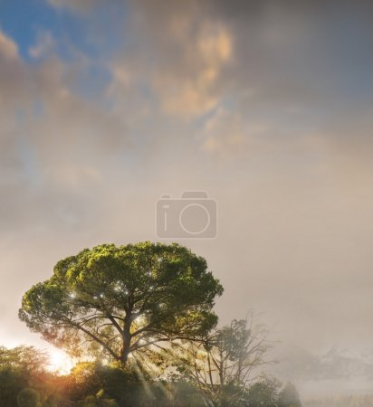 Photo for A single tree atop a misty hill dappled in sunlight against a pretty moody sky with copy space - Royalty Free Image