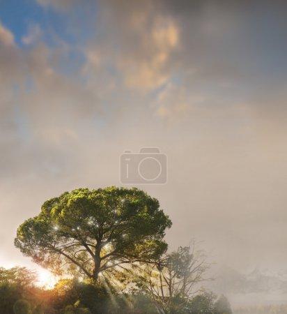 Foto de Un solo árbol encima de una colina brumosa moteada en la luz del sol en un cielo muy temperamental con espacio de copia - Imagen libre de derechos