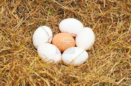 Photo for Five white eggs and one yellow egg lie on straw - Royalty Free Image