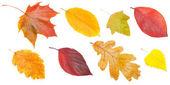 """Постер, картина, фотообои """"коллекция осенних листьев"""""""