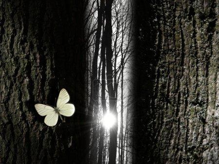 Photo pour Un rayon de soleil brille dans une forêt sans feuilles, à travers un passage étroit d'arbres. un papillon blanc donne la spiritualité de la scène. - image libre de droit