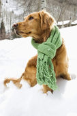 Dog in snow.