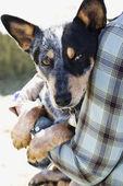 Person Holding Australian Shepherd