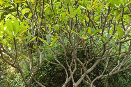 Photo pour Arbres et buissons en Australie . - image libre de droit