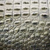 Crocodile scales.