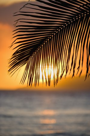 Palm leaf at sunset.