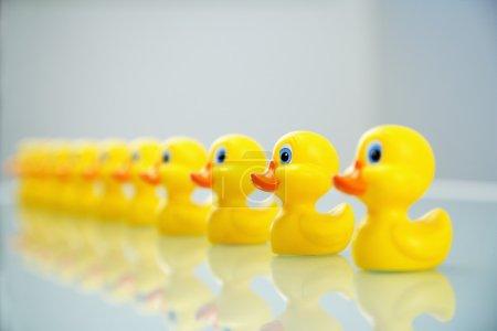 Foto de Patos de goma amarillo todos alineados en una fila. - Imagen libre de derechos