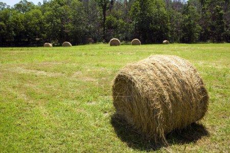 Photo pour Balle de foin dans le champ agricole . - image libre de droit