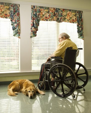 Photo for Therapy dog lying next to an elderly man in a wheelchair who looks out a window. Vertical shot. - Royalty Free Image