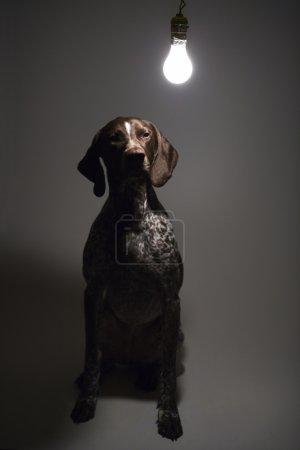 Dog under interrogation.